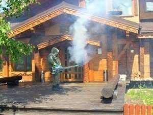 Фумигация фосфином как способ борьбы с короедами в деревянном доме
