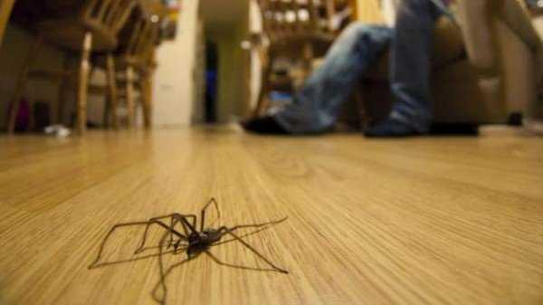 6 вещей которые помогут Вам избавиться от пауков в квартире