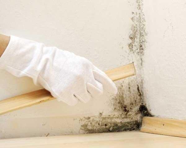 Советы, чем обработать от грибка и плесени стены из обоев или гипса перед поклейкой обоев