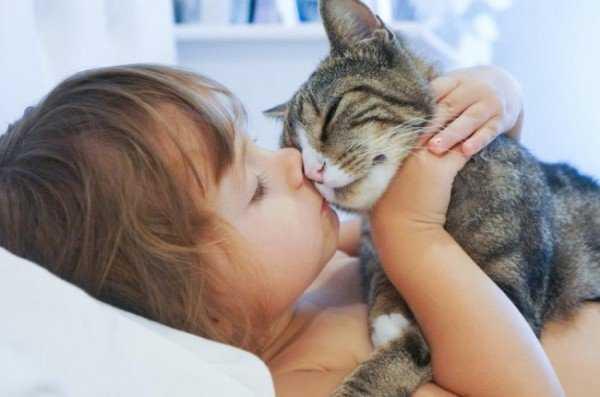 Капли от блох: какие правильно выбрать для кошки?