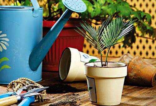 Способы защиты и профилактики комнатных растений от мошек