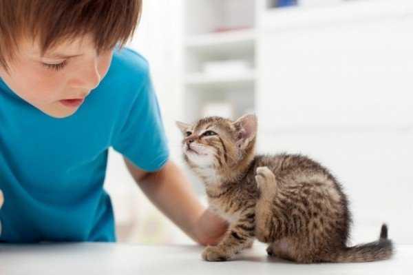 Блохи у котенка: Как избавиться и Что предпринять