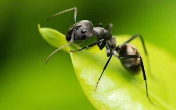 Продолжительность жизни муравьев разных видов и в разных условиях