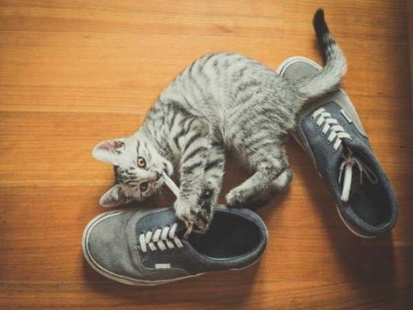 Блохи у домашней кошки — Способы профилактики и лечения
