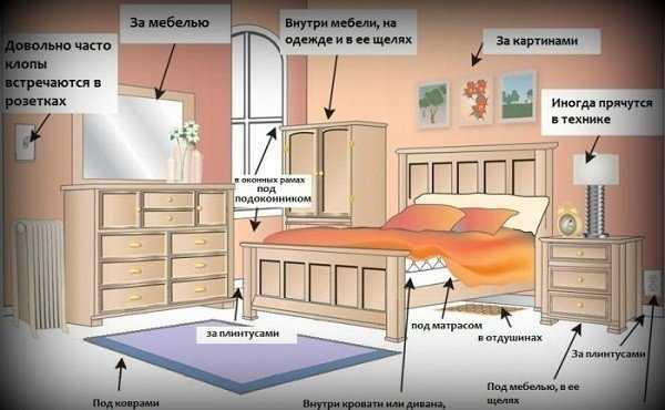 Уничтожить клопов в квартире: 5 эффективных способов