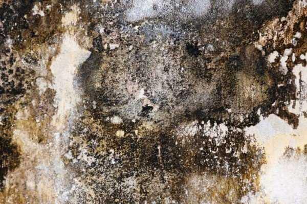 Как обработать стены медным купоросом от плесени: приготовление раствора и процедура обработки