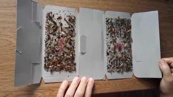 Виды и выбор ловушек для тараканов