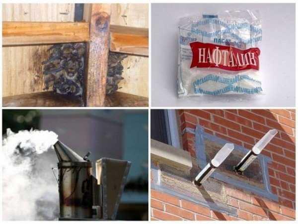 10 способов вывести летучих мышей из-под крыши