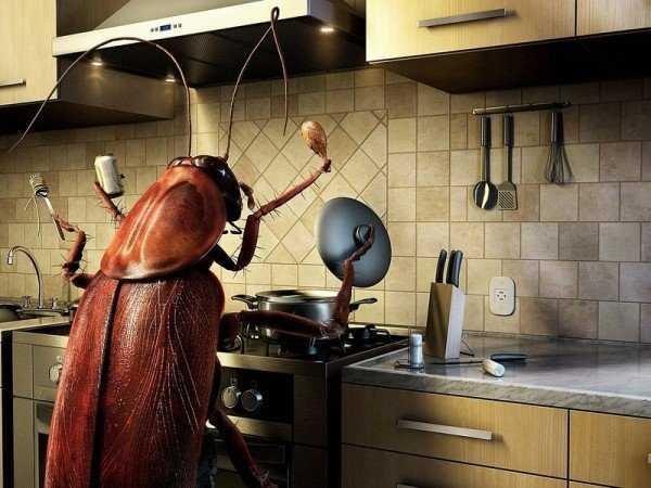 Эффективные способы уничтожения тараканов