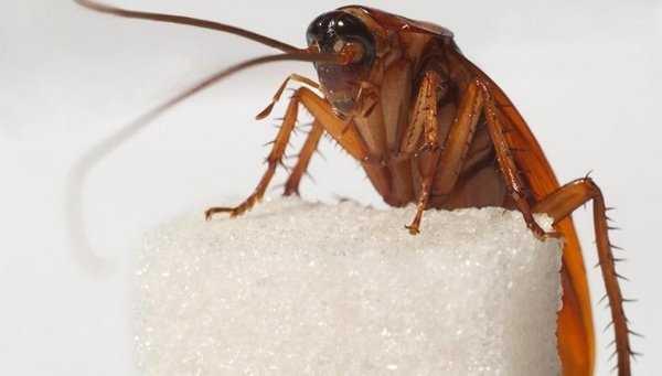 Как избавиться от тараканов и каковы причины их появления