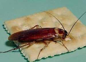 Огромный выбор химических средств — отрава от тараканов