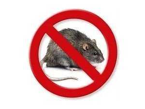 Средства от крыс и мышей в доме и квартире