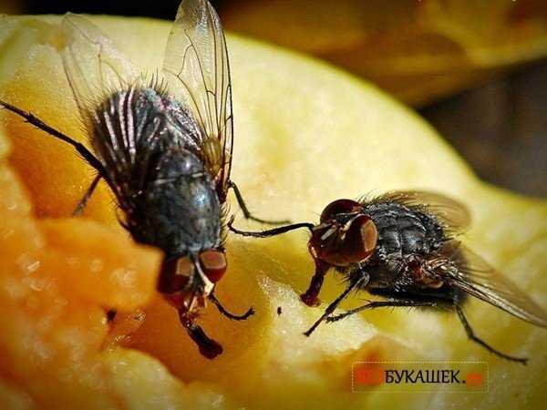 Причины появления мух в квартирах