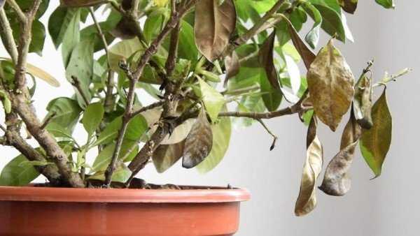 Мокрица насекомое как избавиться в квартире