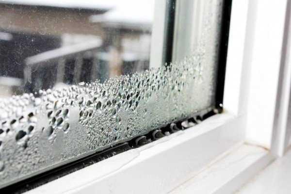 Плесень на окне: причины появления, методы и средства борьбы