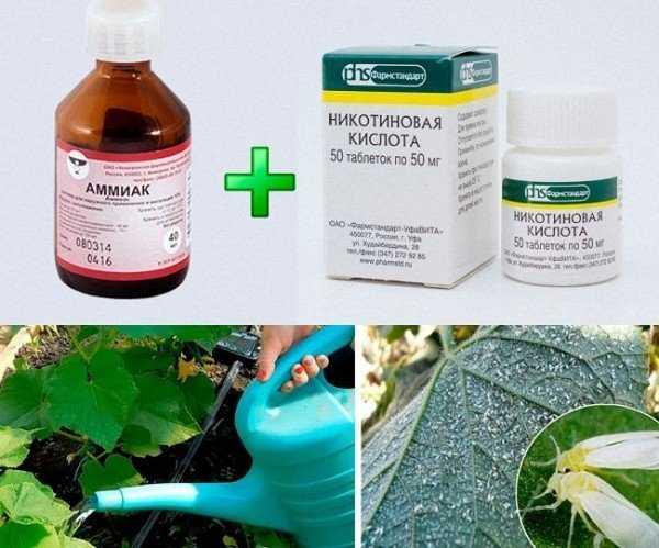 Эффективные народные средства и химикаты в борьбе с белокрылкой