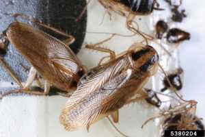 Как избавиться от тараканов в квартире навсегда пошаговая стратегия по истреблению прусаков