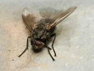 Как избавиться от мух в доме быстро, дёшево и сердито