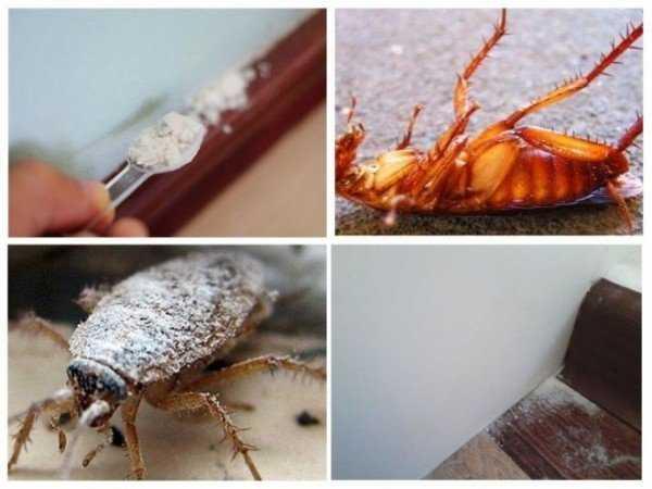 Борная кислота от тараканов — лучшая отрава для усатых пруссаков!