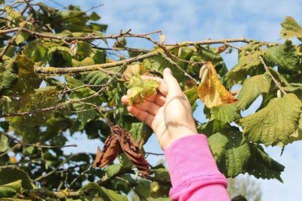 Клещ лесной. Укус клеща — лечение. Как бороться с лесным клещом