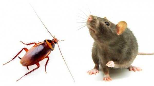 Тот, кто ест тараканов, наш друг и союзник по борьбе с домашним паразитом