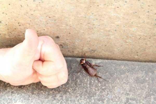 Варан средство от тараканов — описание, инструкция, действие, эффективность, меры безопасности