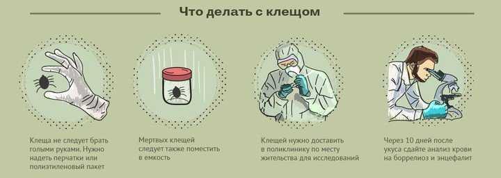 болезни от укуса клеща