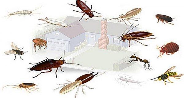 Какие домашние насекомые заселяют дома и квартиры: виды и описание