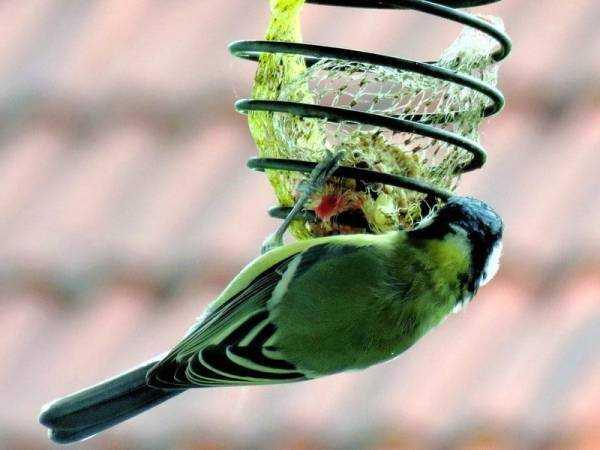 Возможна ли биозащита сада зимой?