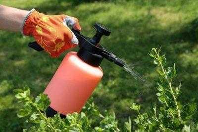 Какую обработку сада от болезней и вредителей нужно проводить ранней весной?
