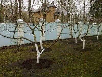 Как сохранить урожай: обработка деревьев от болезней