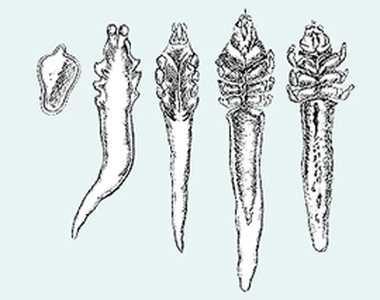 Фото пылевых, постельных домашних клещей под микроскопом, признаки наличия паразитов в доме
