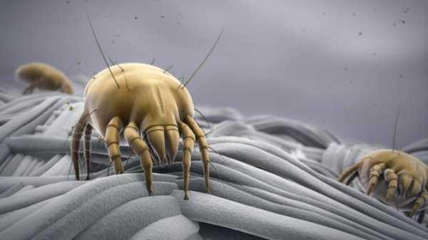 Как избавиться от постельных (пылевых) клещей? Способы борьбы