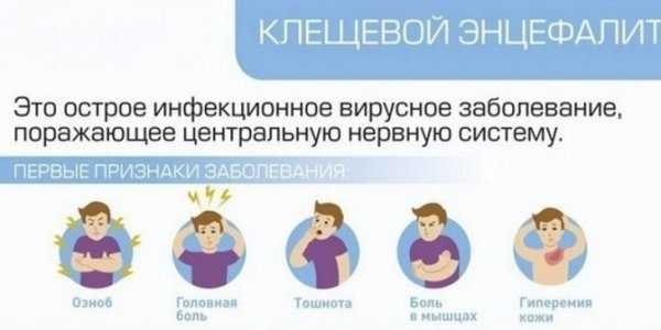 Симптомы после укуса энцефалитного клеща у человека