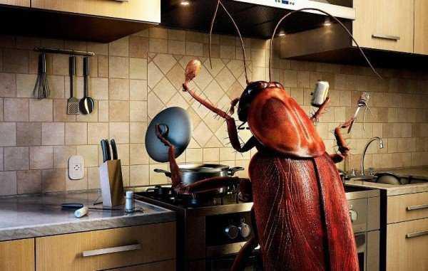 Тараканы в квартире – причины возникновения проблемы