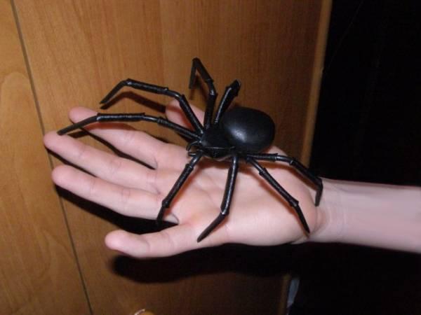 Завелись пауки в квартире: что делать и стоит ли бояться пауков