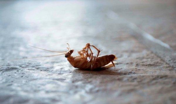 Чем потравить тараканов в квартире: выбор средства и обработка