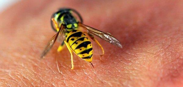 Укус осы: чем лечить в домашних условиях, как оказать первую помощь