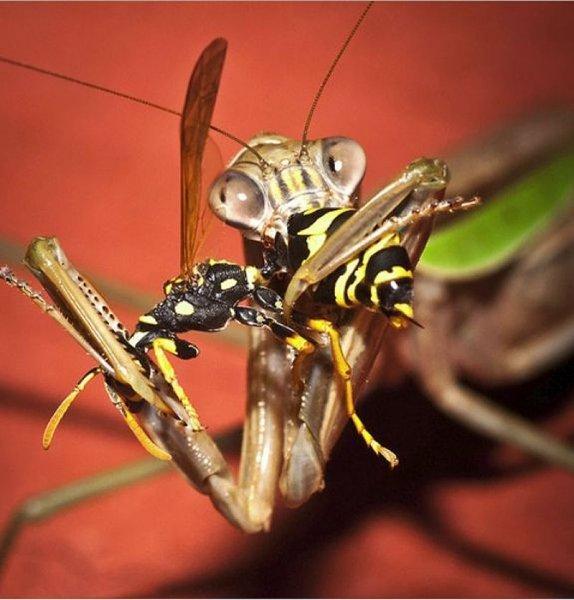 Чем питаются осы и их личинки — любимые и необычные лакомства