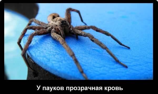 Паук — это насекомое или нет: строение и значение животных в природе