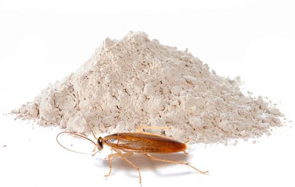 Effektivnye Insekticidnye Sredstva Dlja Borby S Tarakanami V Zhilom Pomeshhenii 9638111
