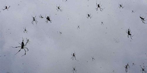 К чему снится женщине паук во сне? Сонник: цветные пауки, много маленьких пауков, убить черного паука
