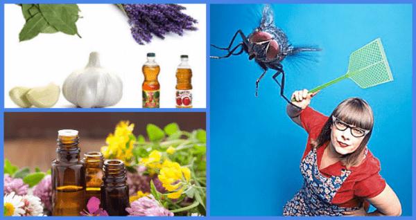 Как эффективно избавиться от мух
