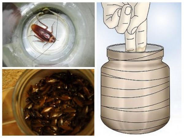 Разновидности ловушек для тараканов, насколько они эффективны на практике