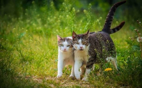 Кошачьи блохи: чем опасны, кусают ли людей, как от них избавиться в доме