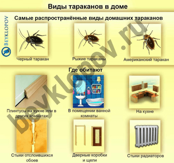 Летающие тараканы – правда или выдумка