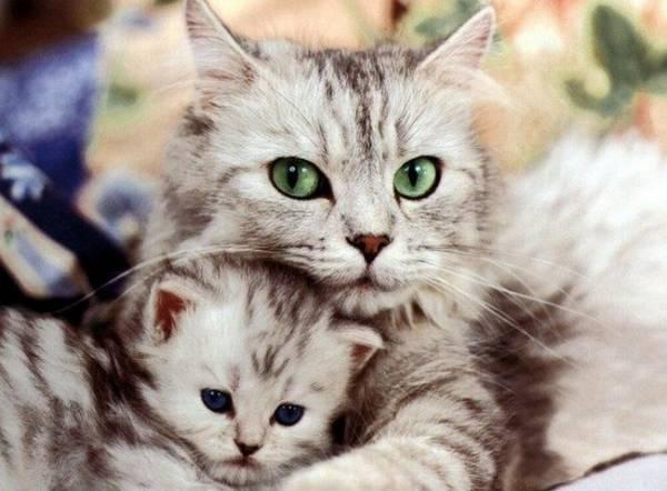 Как избавится от блох у маленького котенка: безопасные препараты и правила обработки
