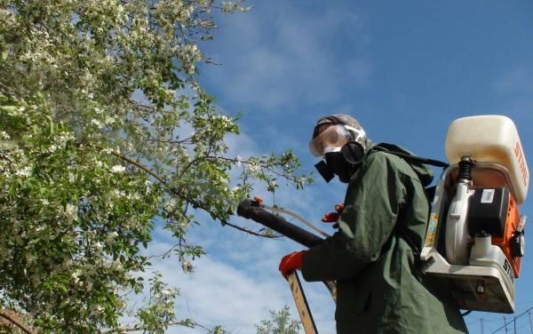 Меры борьбы с яблоневой молью