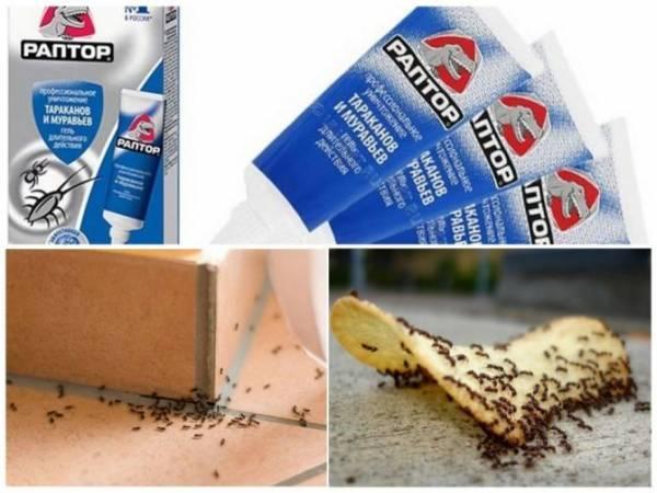 Ловушки от муравьёв — как средство борьбы с рыжими захватчиками. Средство от муравьёв в квартире
