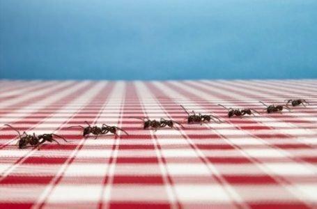 Эффективные покупные и народные средства для избавления от муравьев на кухне